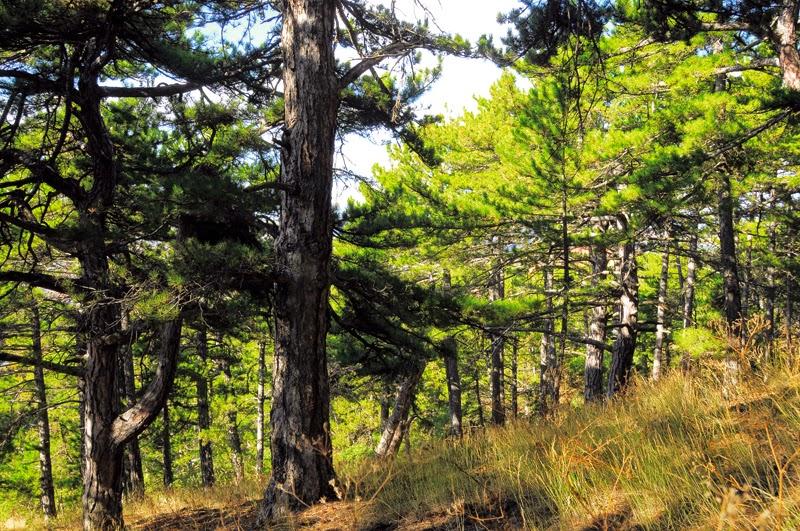 Çamlık Milli Parkı Yozgat