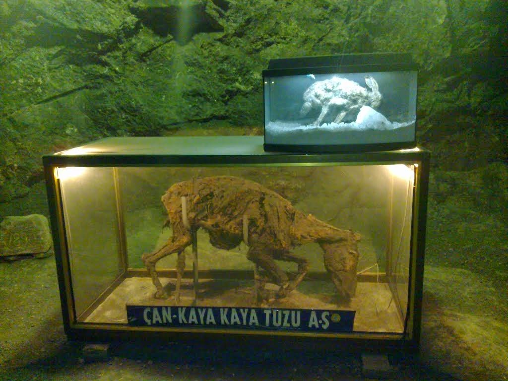 Çankırı Tuz Mağarası Ölü Eşek