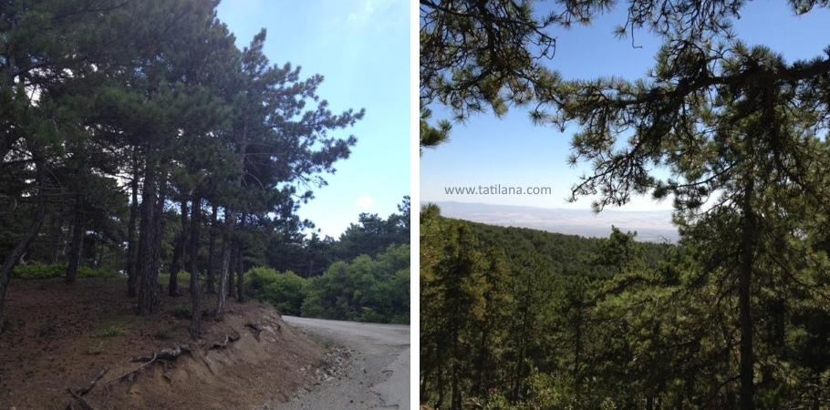 Ankara Beynam Ormanlari 2