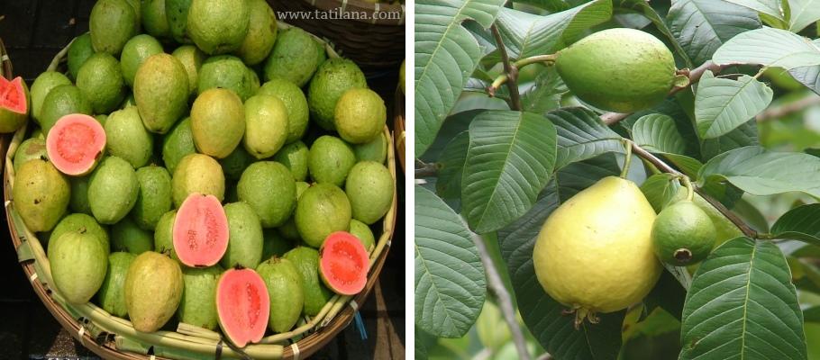 Tayland Guava Meyvesi