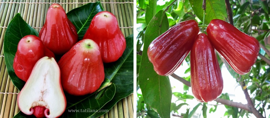 Tayland Rose Apple Meyvesi