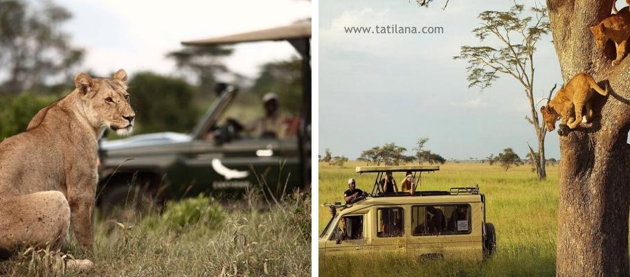 Tanzanya Safari 3