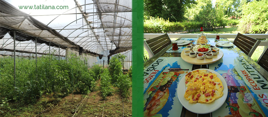 Filyos Ecopark Dogal Mutfak